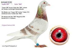 H. Will - 864 - 56 x 1. Konkurs bis 2016 - Auktions-Nummer 262595 - Die professionelle Brieftauben-Auktion!