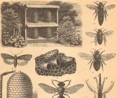 antique bee etching | 1894 Bees Bee Hives Beekeeping Original by CabinetOfTreasures