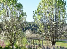 We photograph our many country properties such as this formal garden in Ferguson valley. This design was filled with a large pergola covered in wisteria, deciduous trees, formal hedging, a lake with a jetty, a apple orchard and formal hedging. This is one of our many country landscape designs #gardendesign #gardening #DIY #country #landscape #landscapedesign #gardeningaustralia # howtogarden #naturescapecreative