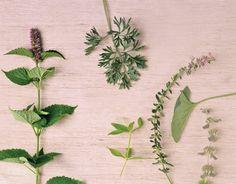 Forgotten Herbs