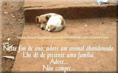 ANIMAIS AME-OS E OS  DEIXE  VIVER: Neste Natal adote um animal abandonado