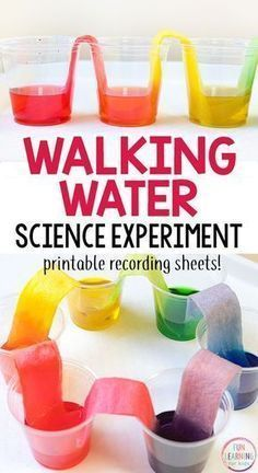 Water Science Experiment for Kids Walking water science experiment that is so much fun! This rainbow science activity is super cool!Walking water science experiment that is so much fun! This rainbow science activity is super cool! Science Crafts For Kids, Science Activities For Preschoolers, Water Crafts Preschool, Science Toddlers, Kindergarten Science Experiments, Easy Science Fair Projects, Science Education, Physical Science, Color Activities For Kindergarten