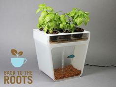 Home Aquaponics Kit: Self-Cleaning Fish Tank That Grows Food by Nikhil & Alejandro, via Kickstarter.  I actually consider getting a fish...