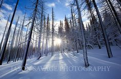 helena montana | ... continental divide trail near helena montana with the new snow we ve
