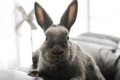 Bunny Knows How to Pose for Her Portrait - October 16, 2011