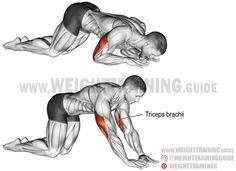 Kneeling bodyweight triceps extension. An isolation bodyweight exercise. Target muscle: Triceps Brachii. Synergists: None.