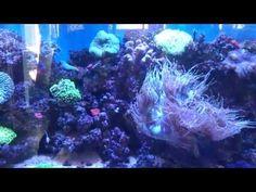 Tour of Russell's 5ft reef aquarium