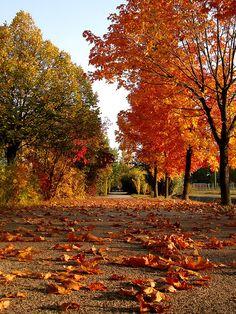 Autumn Path, Veszprem, Hungary photo via luster Winter - Lake Bohinj, Slovenia Autumn Walks, Autumn Day, Autumn Leaves, Bohinj, Autumn Scenes, Autumn Aesthetic, All Nature, Autumn Nature, Seasons Of The Year
