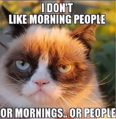 I don't like morning people funny memes meme lol funny quotes grumpy cat cute. humor angry cat