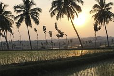 Sunset over rice fields in Hampi, India