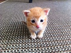 """Kittens can happen to anyone."" --Paul Gallico"
