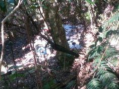 A car in a rainforest?