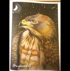 Red Tailed Hawk by Angela