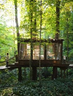 tree house ... windows are kind of important