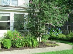The Butterfly bush provides beautiful blooms from April through October, and attracts swarms of butterflies.