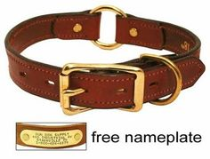 Louie would look so dashing in this collar. But it means buying from GunDogSupply. #ambivalence