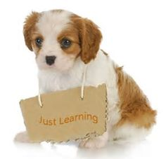 Image result for dogs training