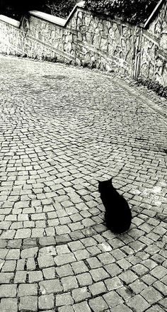 Which direction is home? Who say black cats don't photograph well? #blackandwhite #blackcat @catwisdom101