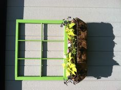 Old wooden window frame found in someone's trash. Stripped old paint then painted green and added flower box from Walmart planted with sweet potatoe vine and Pansy's