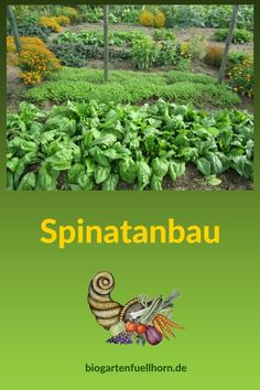 Garden Types Spinatanbau im Garten garden gardentypes gardening yard Garden Types, Most Beautiful Gardens, Amazing Gardens, Garden Care, Herb Garden, Vegetable Garden, Growing Spinach, Garden Fire Pit, Planting Vegetables