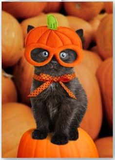 Holy halloween! What happened?!  www.professionalpetsittersinc.com