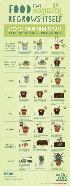 Foods that magically regrow garden diy gardening crafts diy ideas diy crafts small gardens diy garden infographic infograph