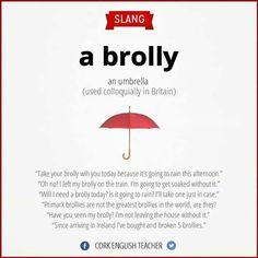 slang: brolly