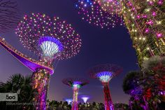 Garden by the bay - Pinned by Mak Khalaf Garden by the Bay at night with the lighted trees. City and Architecture SingapourAsiaAsieBaySingaporearchitecturegardengarden by the baylighttree by yvesl