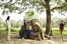 Mahout Experience, Anantara Golden Triangle, Chiang Saen, Chiang Rai, Thailand.