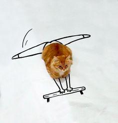 Doodle-Cat-15