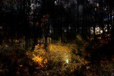 Lys og skygge   Elisabeth Stenseth Norway, Graphic Art, Digital Art, Drawings, Artwork, Woods, Plants, Photography, Painting
