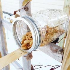 Trendy Homemade Bird Houses For Kids Projects Ideas Squirrel Feeder Diy, Squirrel Food, Homemade Bird Houses, Homemade Bird Feeders, Large Bird Feeders, Diy Doll Miniatures, Diy Bird Bath, Bird House Kits, Backyard Birds