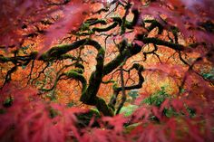 This picture of a Japanese maple tree in the Portland Japanese Gardens won a merit award in the 2012 National Geographic Traveler Photo Contest. (© Photo and caption by Fred An/National Geographic Traveler Photo Contest) National Geographic Traveler Magazine, National Geographic Photo Contest, Photography Contests, Nature Photography, Exposure Photography, Photography Photos, Photographie National Geographic, Photos Du, Cool Photos