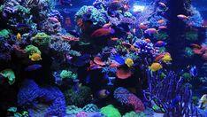 Aquarium Led, Led Aquarium Lighting, Marine Aquarium, Reef Aquarium, Planted Aquarium, Saltwater Tank, Saltwater Aquarium, Freshwater Aquarium, Sps Coral