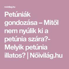 Petúniák gondozása – Mitől nem nyúlik ki a petúnia szára?- Melyik petúnia illatos?   Nőivilág.hu