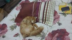 I like this position when iam sleep