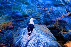 Gaviota - Seagull by gabi.goni