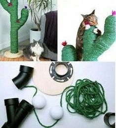 - Cat Toys - Best cat and catnip toys for kitty play time, diy, and more - Katzen Crazy Cat Lady, Crazy Cats, Lampe Cactus, Cactus Cactus, Cactus Flower, Diy Cat Tree, Cat Room, Pet Furniture, Diy Stuffed Animals