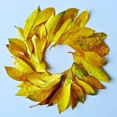 yellow leaves, Koh Chang, Thailand