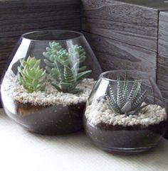 Terrarium Inspiration - succulents