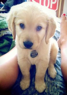 The cutest puppy in the world! Eli :)