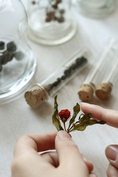 making dry flower with glycerin(glycerolglycerin)