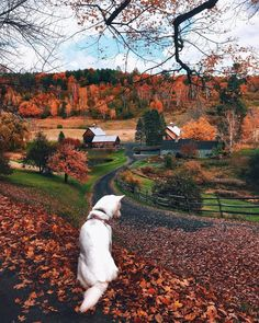 This is Sleepy Hollow farm, in Woodstock, Vermont! Once Upon an autumn day, Colorful leaves began to fade In the midst of a chilly, frosty air As multitude of trees grew steadily bare. Autumn Aesthetic, Autumn Cozy, Fall Winter, Photos Voyages, Autumn Photography, Photography Magazine, Editorial Photography, Travel Photography, Fall Pictures