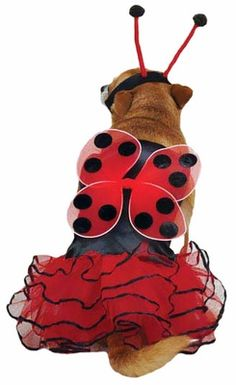 Casual Canine Lucky Bug Costume Red - MEDIUM