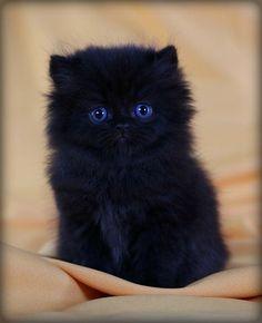 black kitten: