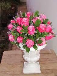 Resultado de imagem para rosa colombiana