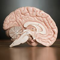 A vaccine against Alzheimer's disease may soon be on the horizon, say Canadian researchers, who are studying the injection in mice.
