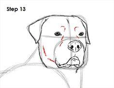 http://www.how2drawanimals.com/images/Rottweiler/draw-rottweiler-dog-13.jpg