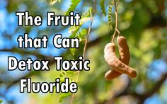 From detoxing fluoride to boosting heart health the tropical fruit tamarind has much to offer. Here are more than 10 tamarind health benefits.