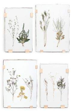 DIY Inspiration | Framed Dried Foliage
